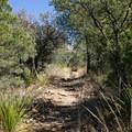 Shady spots are scarce.- Chisos Basin Loop