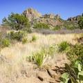 Diverse vegetation along the trail.- Chisos Basin Loop