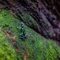 This area of O'ahu is also home to some poison dart frogs, which can be found nowhere else in Hawai'i.- Waiakeakua Stream
