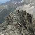 Topping out on the ridge.- Grands Montets: East Ridge