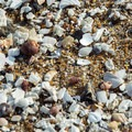 There are a few shell deposits to be found among the stretches of sand.- Old Orchard Beach