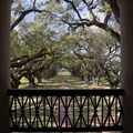 The view from the second floor overlooks the beautiful live oak alley.- Oak Alley Plantation