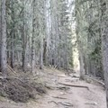 The trail begins and ends through a wooded area.  - Nambe Lake Trail
