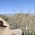 The other-worldly ocotillo cactus along the trail to Wasson Peak.- Wasson Peak via Hugh Norris Trail