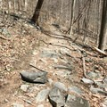 The trail can be rocky.- Wolf Rock + Chimney Rock Loop