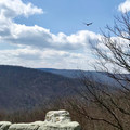 As an added bonus, hawks love to play in the wind near the rocks.  Keep an eye out for them!- Wolf Rock + Chimney Rock Loop