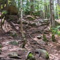 More rocks and roots in the trail near Lower Falls.- Purgatory Falls