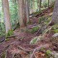 Trail above Upper Purgatory Falls.- Purgatory Falls