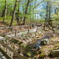 A section of the Live Animal Trail between exhibits. - Squam Lakes Natural Science Center