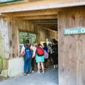 Groups gather to observe feeding time in the river otter exhibit. - Squam Lakes Natural Science Center