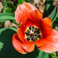 Spring flower in Kirkwood Gardens.- Squam Lakes Natural Science Center