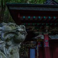 Guardian dog watching over a Oji in a dark forested part of the trail.- The Kumano Kodo: Nakahechi Route