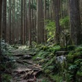 A tiny oji on the side of the trail. - The Kumano Kodo: Nakahechi Route