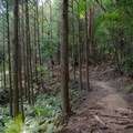Much of the trails are rooted doubletrack that has seen countless travelers pass over the centuries. - The Kumano Kodo: Nakahechi Route