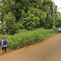 The trailhead starts at Kapahi Road northwest of the town of Kapa'a.- Ho'opi'i Falls Trail