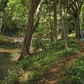 Walking along the Kapa'a Stream. - Ho'opi'i Falls Trail