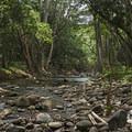 Kapa'a Stream. - Ho'opi'i Falls Trail