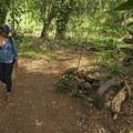 A long-abandoned car along the trail. - Ho'opi'i Falls Trail