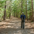 Lincoln Woods Trail.- Lincoln Woods Trail