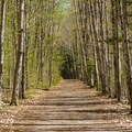 Lincoln Woods Trail is a generally flat, easy walk. - Lincoln Woods Trail