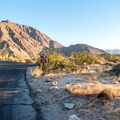 There are 50 RV sites with full hookups.- Borrego Palm Canyon Campground