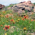 Wildflowers break the rough surfaces of the rock faces. - Elk Mountain