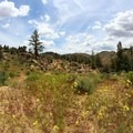 Hiking the Pacific Crest Trail in the spring when wildflowers are in bloom.- Domeland Wilderness via Pacific Crest Trail