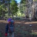 Campsites along Jordan Hot Springs.- Jordan Hot Springs via Blackrock Trailhead