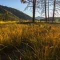Golden light over a meadow at the end of the day.- Jordan Hot Springs via Blackrock Trailhead