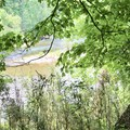A wooded area with glimpses of the Buffalo River.- River View Trail