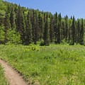 The first large meadow starts and ends the looping portion of the trail. - Pine Hollow Loop
