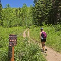Head left to keep on the Pine Hollow Trail. - Pine Hollow Loop