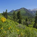 Alpine sunflower and Mount Timpanogos. - Pine Hollow Loop