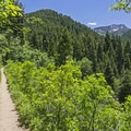 This is a beautiful trail, especially in early summer.- Bowman Fork Trail