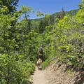 This is a great trail to bring the pups. - Bowman Fork Trail