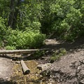 There are a few small creek crossings with bridges. - Bowman Fork Trail
