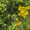 Wildflowers line the trail in spring.- Silver Lake Trail