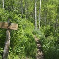 Head straight to Baker Pass or left to Alexander Basin. - Bowman Fork Trail