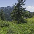Hiking the Bowman Fork Trail.- Bowman Fork Trail