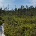 Peacham Bog Natural Area.- Peacham Bog Loop Trail