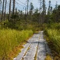 An elevated boardwalk protects the habitat and keeps feet dry.- Peacham Bog Loop Trail