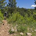 Dogs love this trail.- Shingle Creek Trail