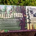 The world's tallest trees make their home in Big Basin.- Berry Creek Falls Loop via Big Basin Headquarters
