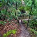 The trails are clearly marked and easy to follow.- Berry Creek Falls Loop via Big Basin Headquarters