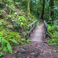 One of many bridges along the Berry Creek Falls Loop.- Berry Creek Falls Loop via Big Basin Headquarters