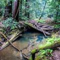 A pile of fallen logs in the creek.- Berry Creek Falls Loop via Big Basin Headquarters