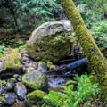 These giant boulders look so small in photographs due to the trees being so big.- Berry Creek Falls Loop via Big Basin Headquarters