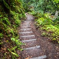 The trail is steep with many stairs near the falls.- Berry Creek Falls Loop via Big Basin Headquarters