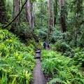 Feeling small among all of the trees and plants.- Berry Creek Falls Loop via Big Basin Headquarters