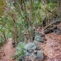 There are seemingly endless switchbacks snaking all  the way up the mountainside.- Kealia Trail